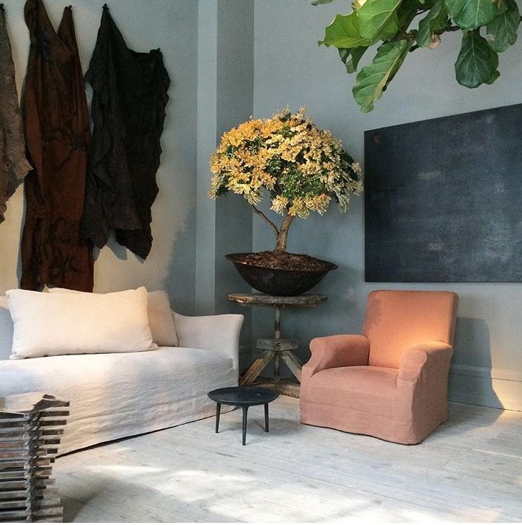 Indoor Plants Fiddle Leaf Fig And Going Bold In The Corner For