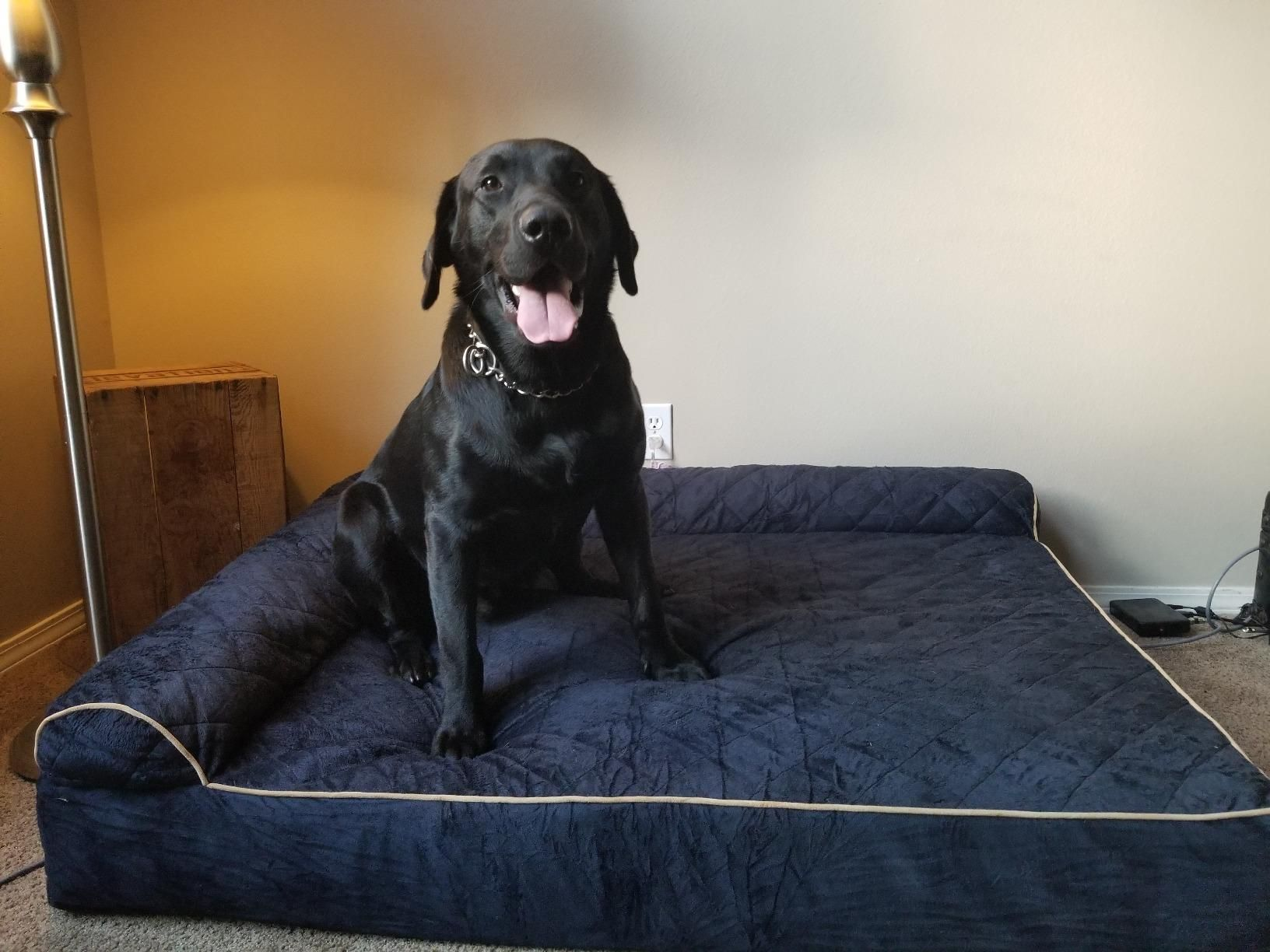 Amazon Com Customer Reviews Furhaven Pet Dog Bed Deluxe Orthopedic Goliath Quilted L Chaise Couch Pet Bed For Dogs Couch Pet Bed Blue Dog Bed