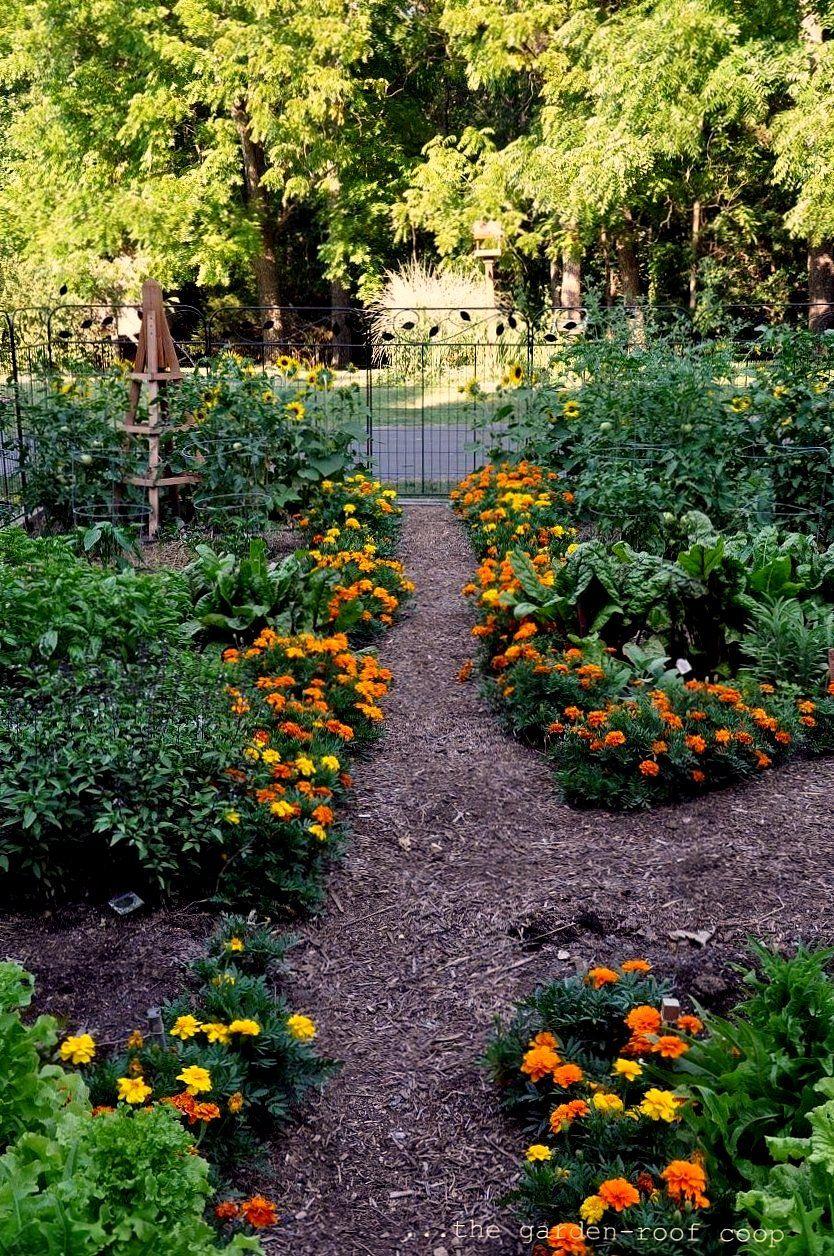 the garden roof coop kitchen garden 2012 garlic and basil kitchen garden potager garden on kitchen garden id=40198