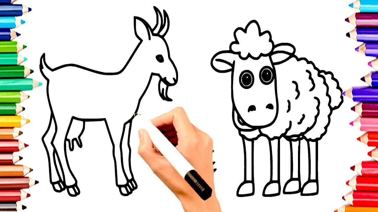 Teach Children Draw Animals Deer Sheep Coloring Book Pages Kids L Drawing For Kids Coloring Book Pages Coloring Books