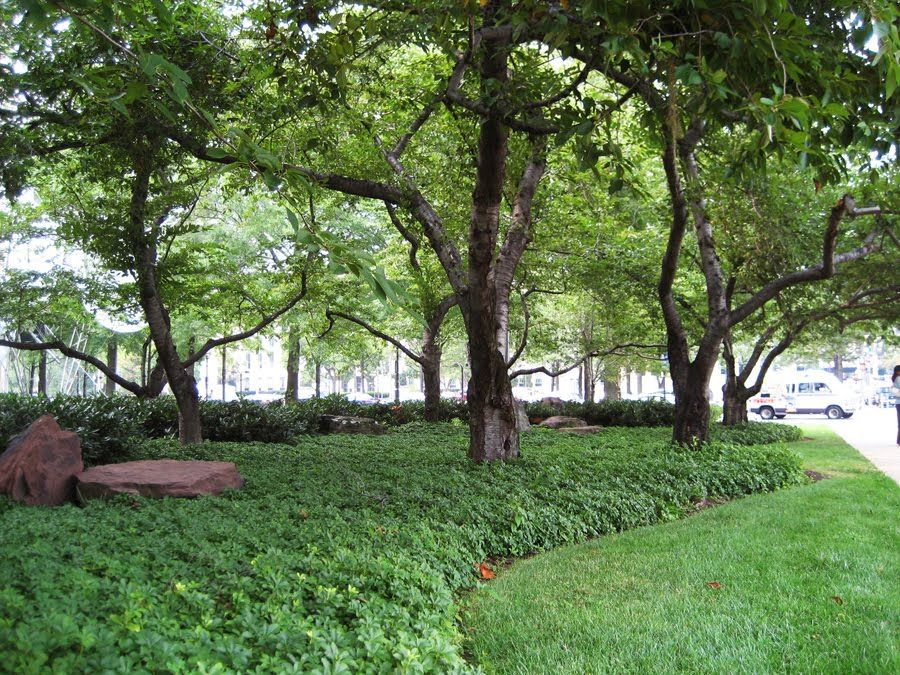 Grounded Design By Thomas Rainer The End Of Groundcovers Landscaping Around Trees Ground Cover Landscape Design