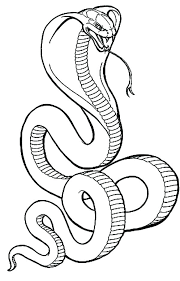Cobra Snake Coloring Pages To Print Out Holly