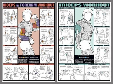 Bicep Tricep Workout Chart Fitness Print For Scott