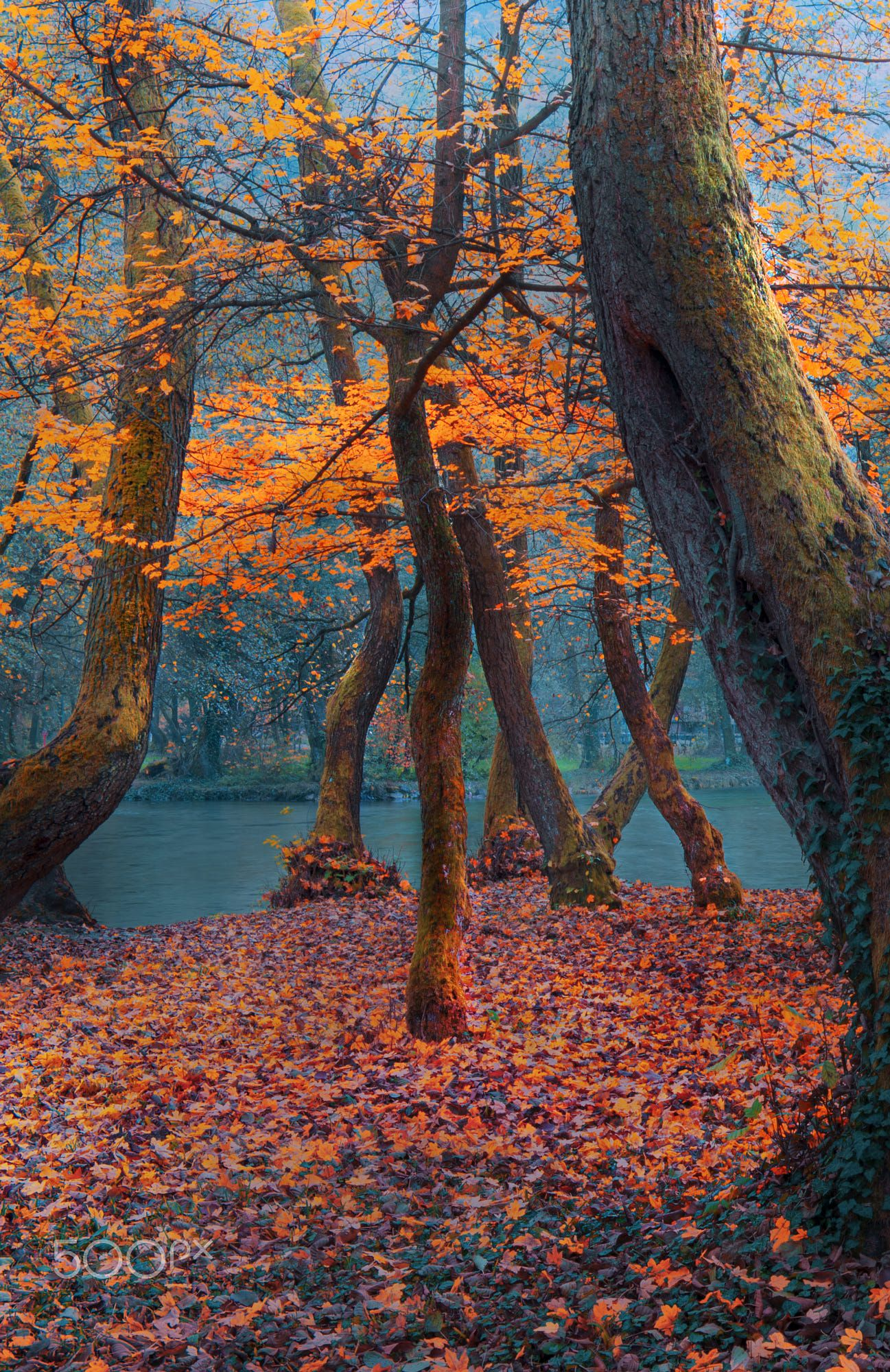 Autumn Impression Ilidza Sarajevo Bosnia Autumn Landscape Nature Photography Autumn Aesthetic