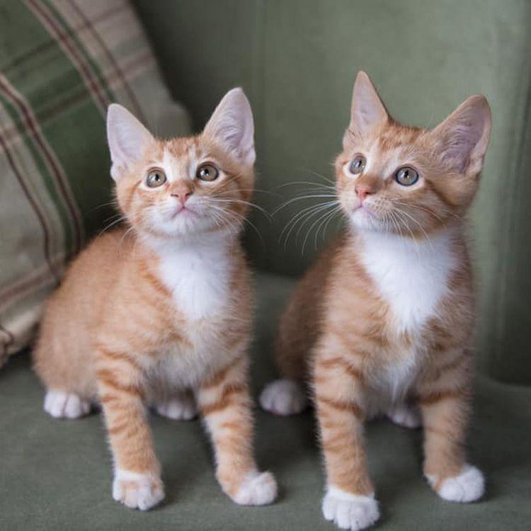 Pin On Kitten Season All About Kittens