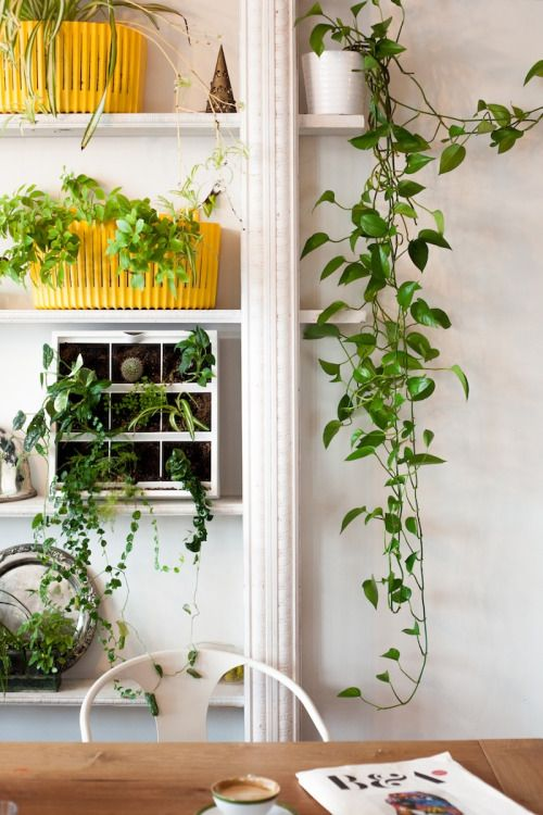 uo interviews natalie wall interior design plants on sweet dreams for your home plants decoration precautions and options id=20844