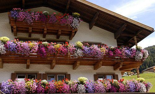 Austriabalconi fioriti flower Fiori da balcone