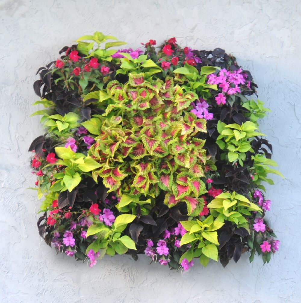 Living Wall Planter From Kinsmangarden Com Planted With