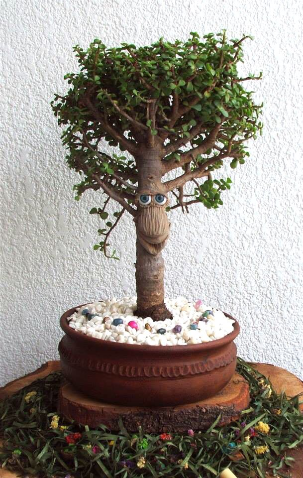 Mandr gonaz mandr gora mandragora arboles con cara bonsai - Mandragora decoracion ...