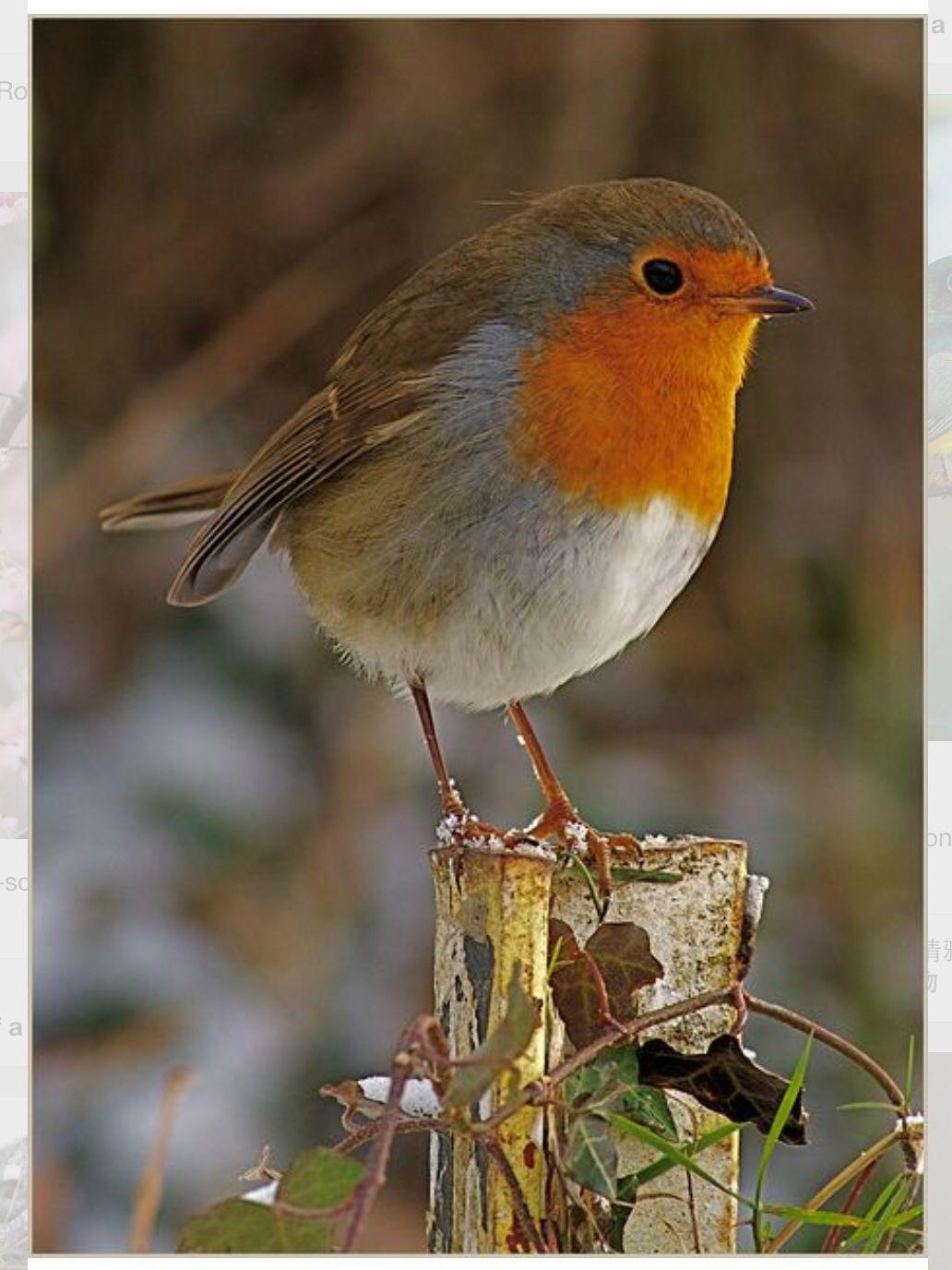 El Que Me Canta Tooodas Las Mananas Bemalte Vogel Hubsche Vogel Vogel Als Haustiere