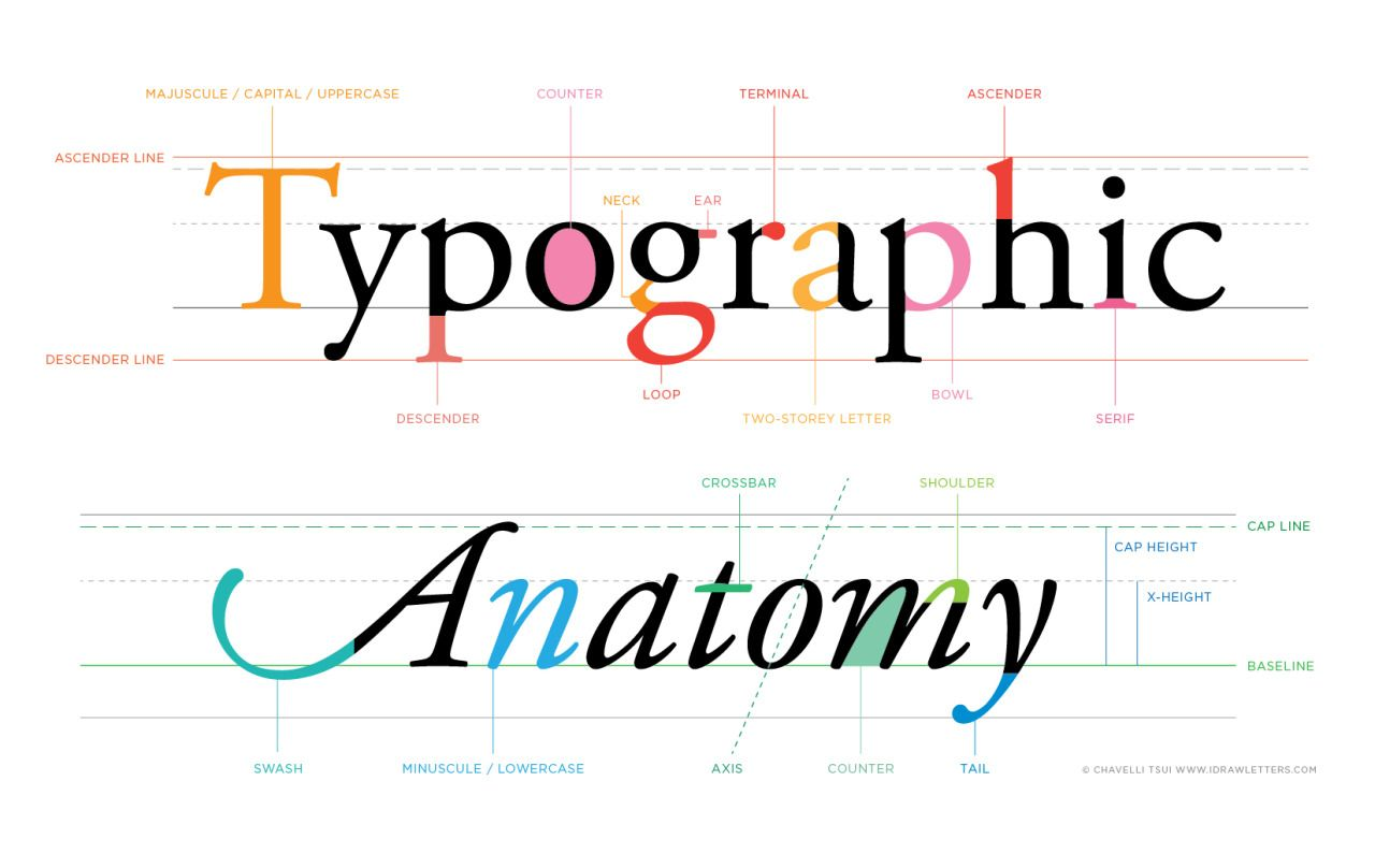 I\'ve made a bright, happy infographic showing the anatomy of ...