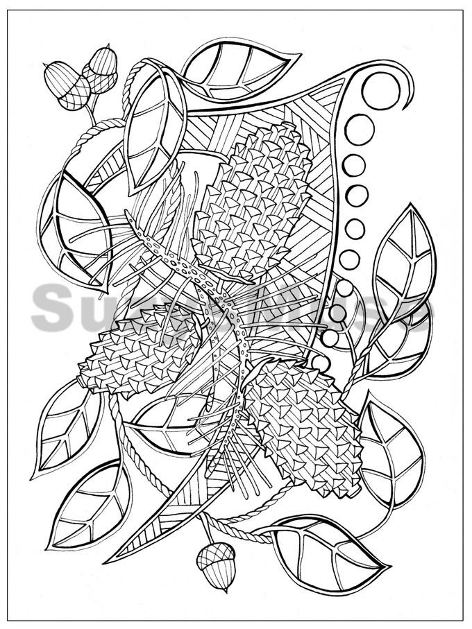 Explore Adult Coloring Book Pages And More