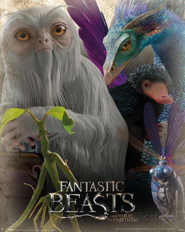 Fantastic Beasts Enchanting Collection Mini Poster 41 X 51cm Wall Decor Home Ebay Fantastic Beasts Fantastic Beasts Creatures Fantastic Beasts Movie