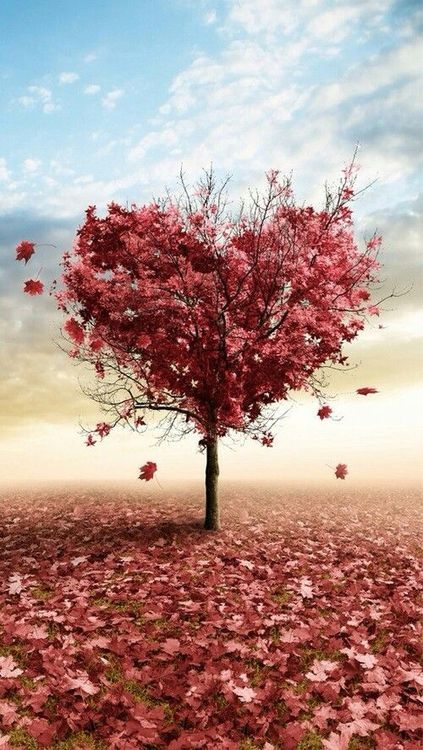 Heart Tree With Images Wallpaper Iphone Love Heart In Nature Love Wallpaper