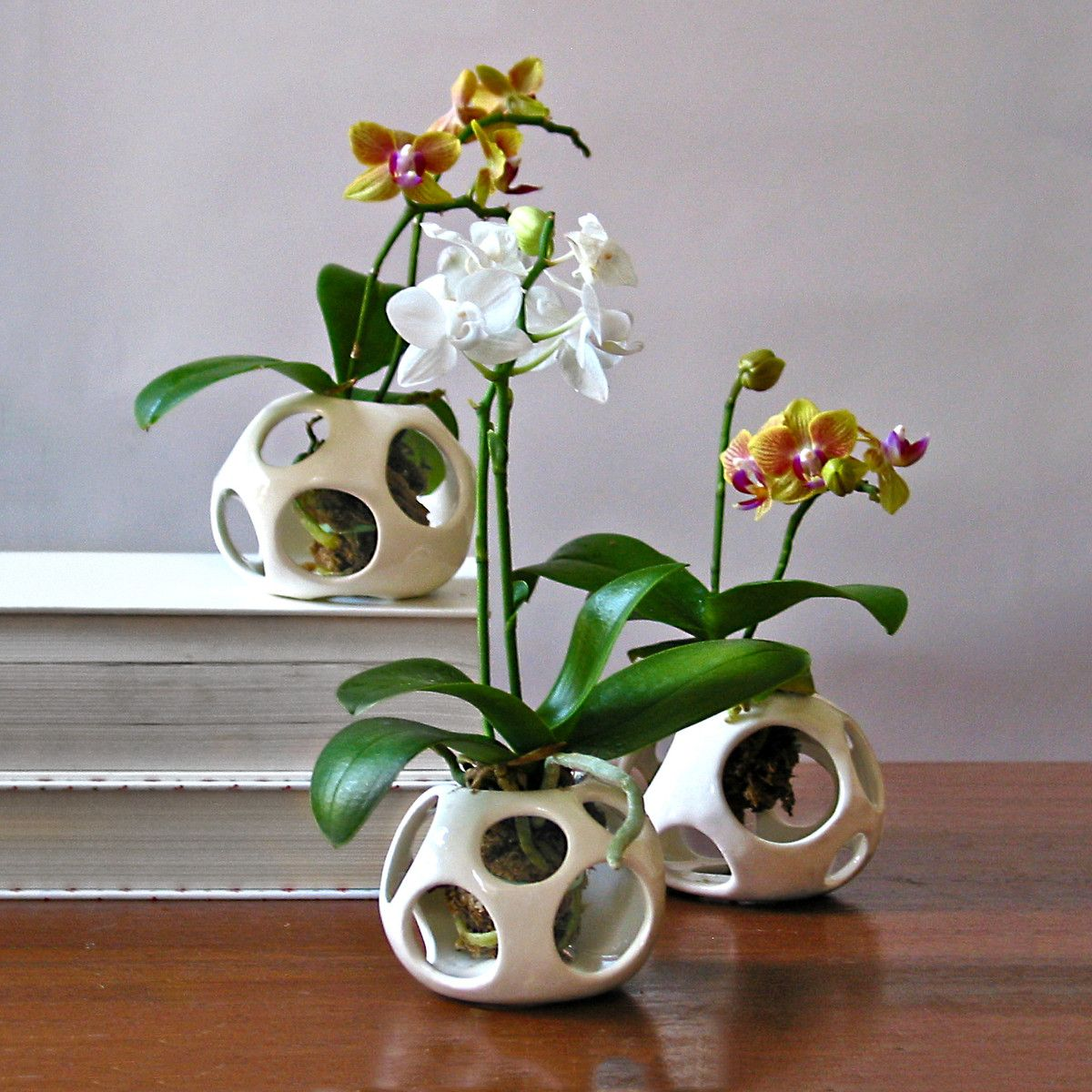 Orchid Pod Plant Holder Miniature Orchids Orchid Pot Plant Holders