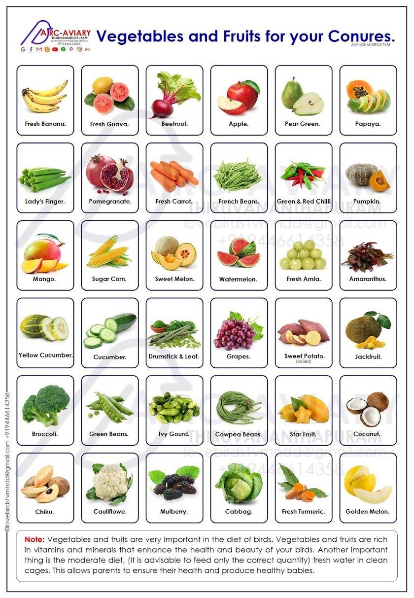 Parrotlets Basic Colour Mutation And Breeding Chart Conure Parrots Parrot Food Recipe Parrot Diet