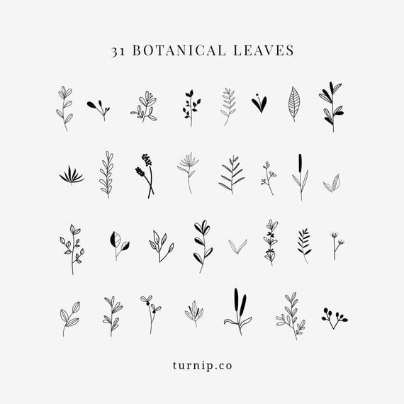 Clipart Floral, Leaf Clipart, Botanical Black And White Clip Art, Clipart Leaves Shrubs Sprigs PNG, Commercial Use, Vector PDF