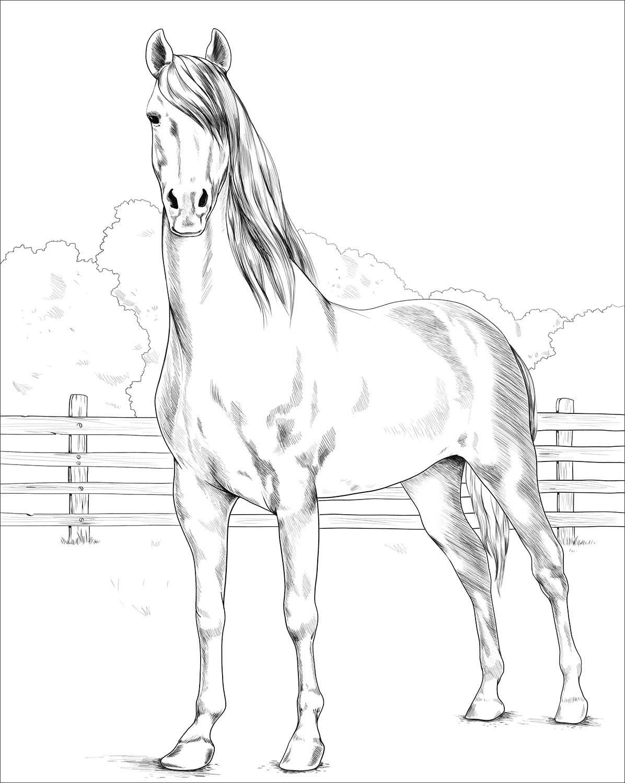Morgan Horse Coloring Page Horse Coloring Horse Coloring Pages Morgan Horse [ 1500 x 1196 Pixel ]