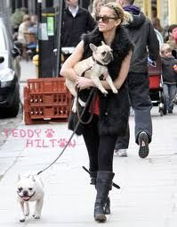 Victoria Beckham French Bulldogs Famous Dogs Bulldog French