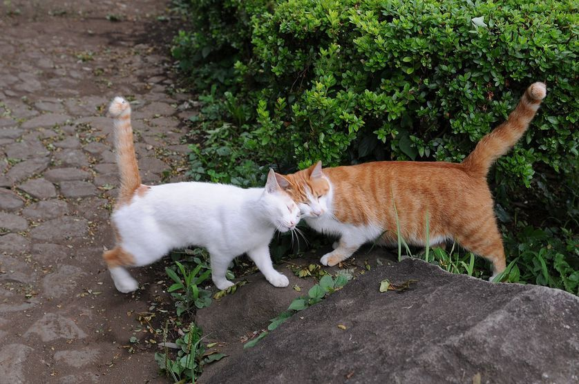 A Cat S Nose Knows More Than You Think Orange Tabby Cats Tabby Cat Anxious Cat