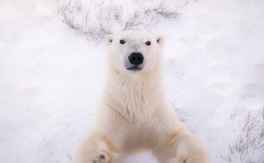 600 Free Polar Bear Bear Images Pixabay Polar Bear Polar Bear Images Bear