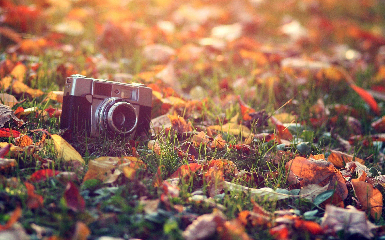 Old Camera Wallpaper Autumn Tumblr Vintage Flowers Wallpaper Fall Wallpaper