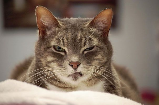 Cats That Are Secretly Plotting To Kill You