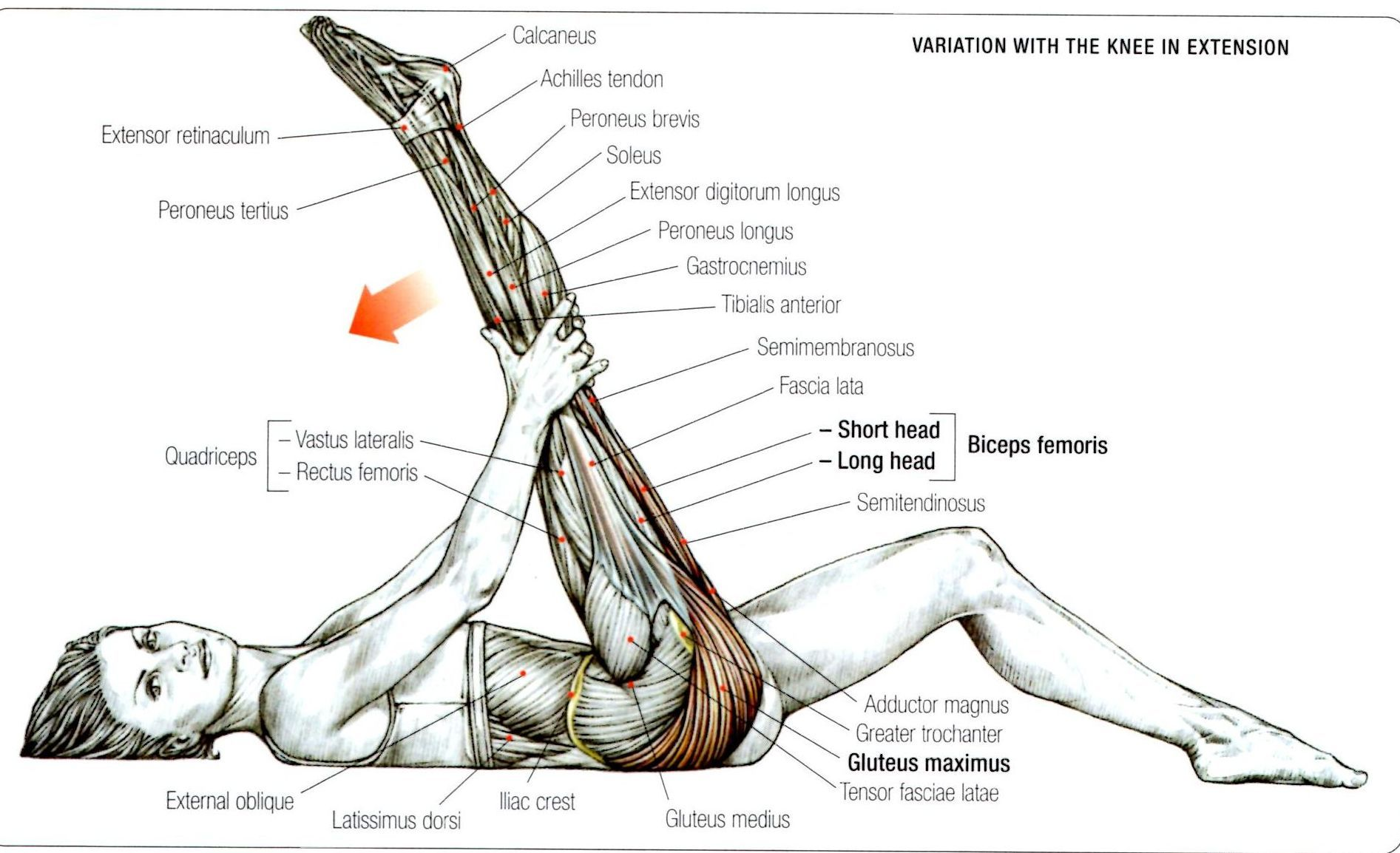 Stretching: How to Stretch the Gluteus Maximus Exercise 2 | masso ...