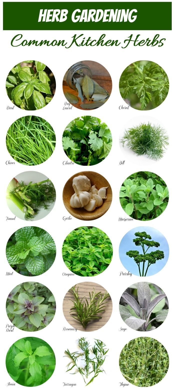 Herb Identification Identifying Fresh Herbs Hydroponic 400 x 300