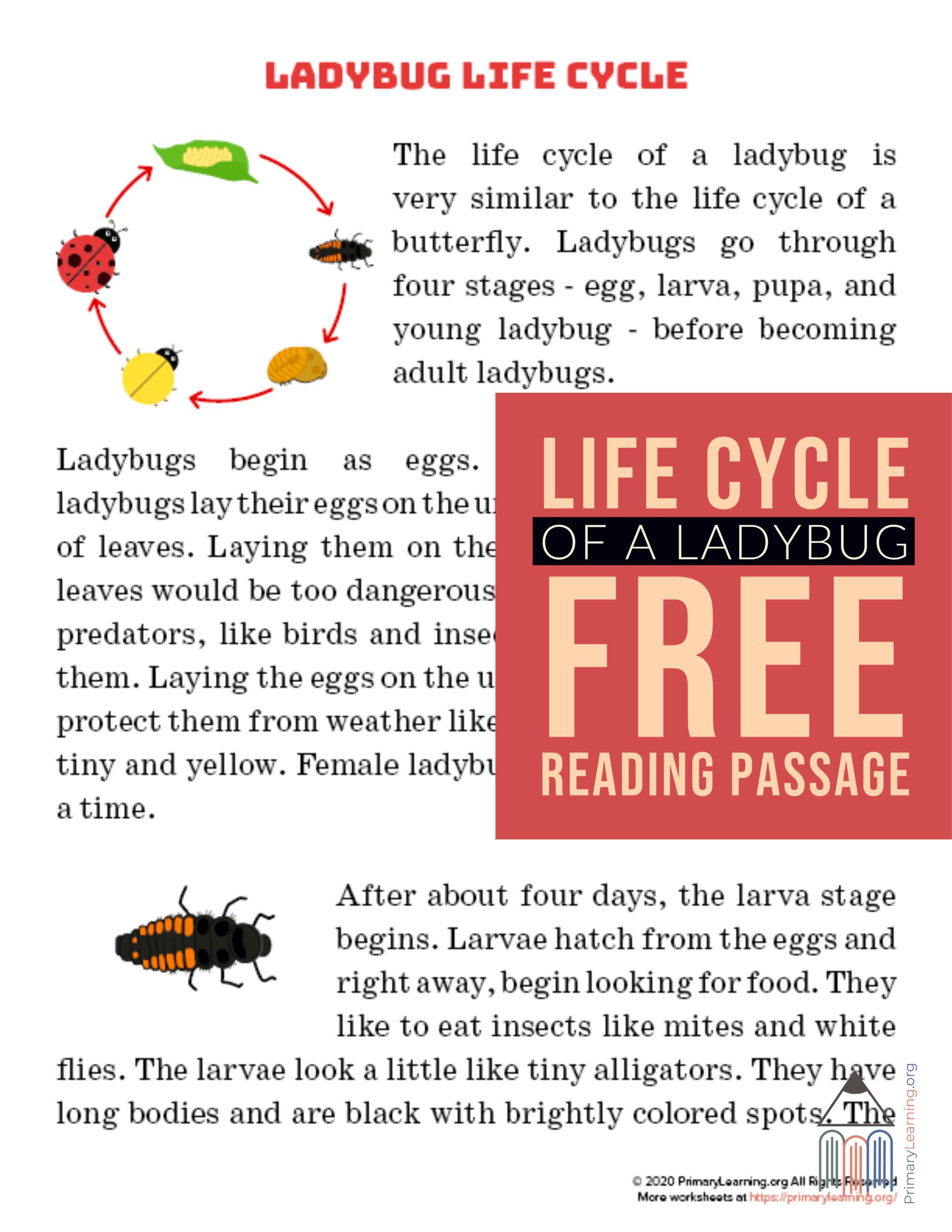 Ladybug Life Cycle Article