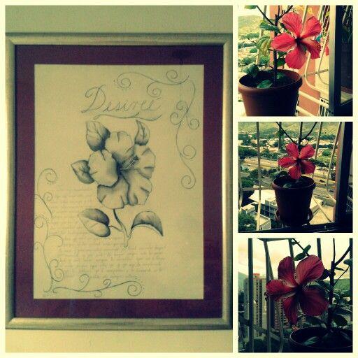 "Mi amor me obsequió mi flor favorita ""Cayena"" en diferentes formas :) ♥"