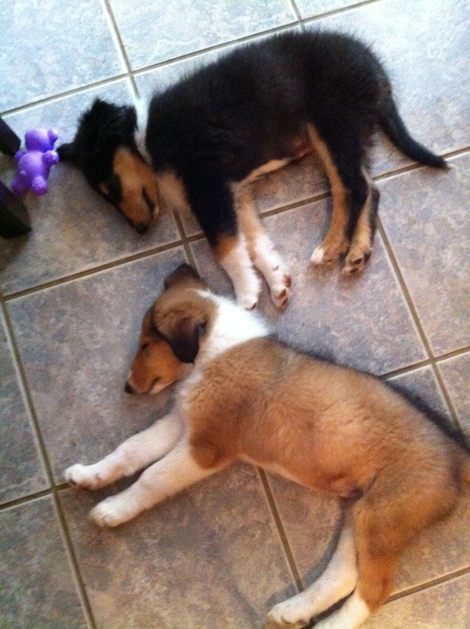 Puppy love ~ Beau & Rae