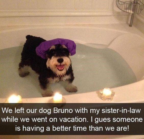 Dog Snapchats Mastering The Art of Captioning
