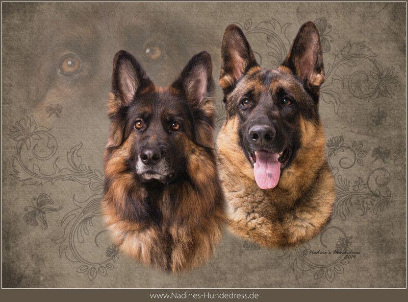 Pin Von Patrice Weinstock Auf German Shepherds Schaferhunde