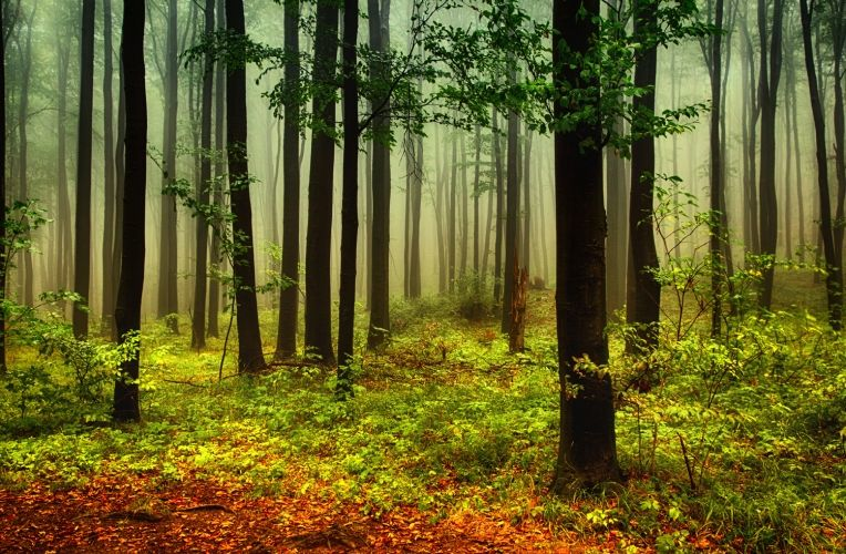 Green And Orange Misty Forest Mural Wallpaper