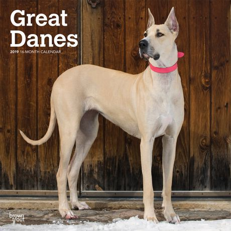 Browntrout Publishers 2019 Great Danes Calendar Dog Breeds Dog