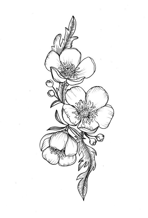 Custom Buttercup Illustration Tattoo For Greer Custom Tattoo Floral Flower Tattoos Flower Tattoo Flower Sketches