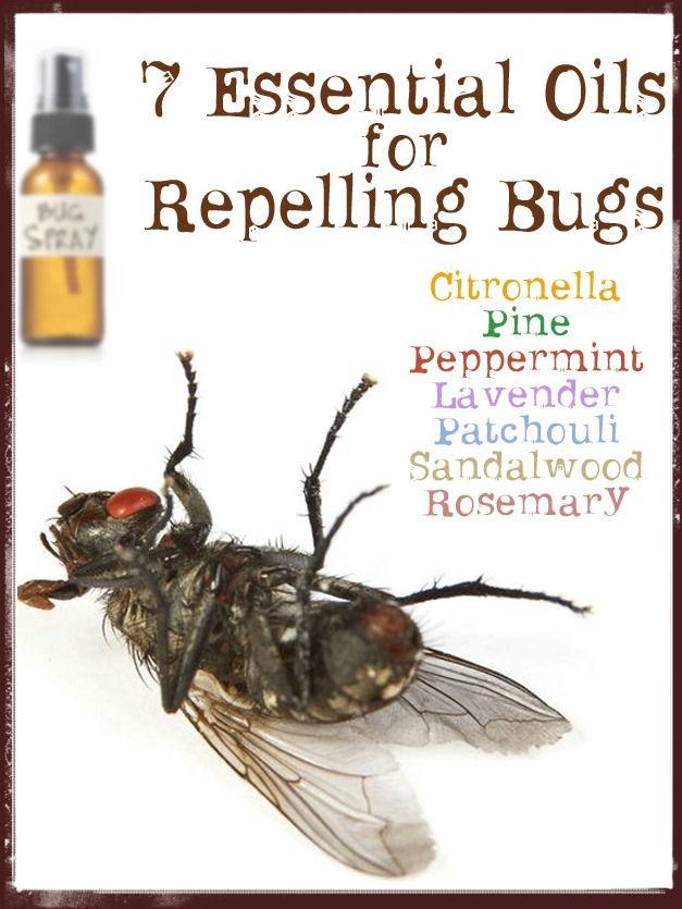 Herbal spider repellent