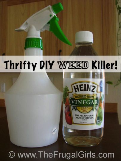 Thrifty DIY Weed Killer Trick!  Just put undiluted vinegar in a spray bottle, spray on weeds early in the day and let the vinegar and sun do their magic!  So much better than bad chemicals!