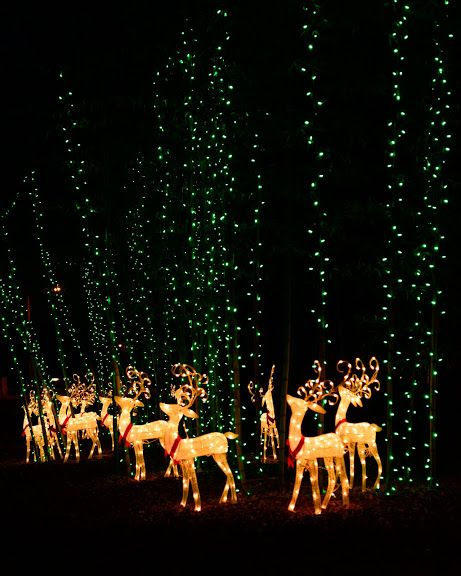 A Reindeer Forest The Picture Doesn T Do It Justice Decorating With Christmas Lights Christmas Lights Best Christmas Lights