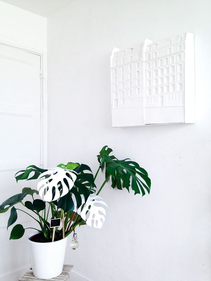 philodendron monstera plantes d 39 int rieur pinterest plantes fleuri et caf. Black Bedroom Furniture Sets. Home Design Ideas