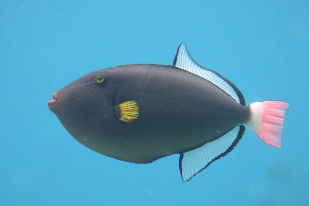 Pin On Kauai Fish That I Saw