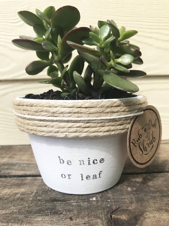 Be nice or leaf | funny pot plant with a pun | be nice or leave 11cm pot
