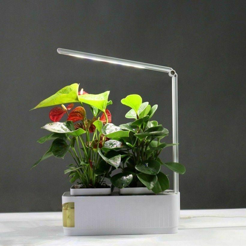 Aerogarden Elite 6 Indoor Garden Hydroponic Growing 400 x 300