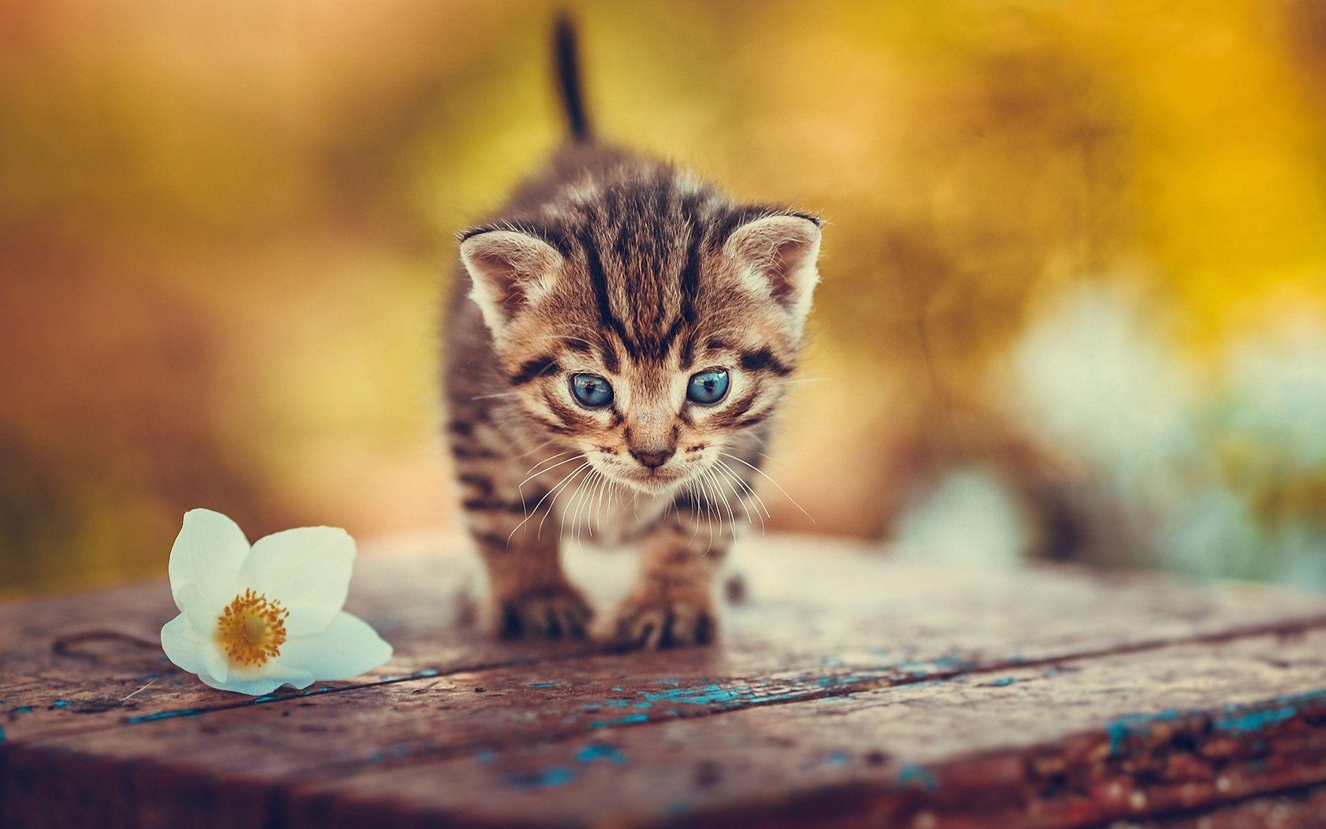 Kitten Wallpaper Cute Cats Photos Kitten Wallpaper Cute Cat Wallpaper