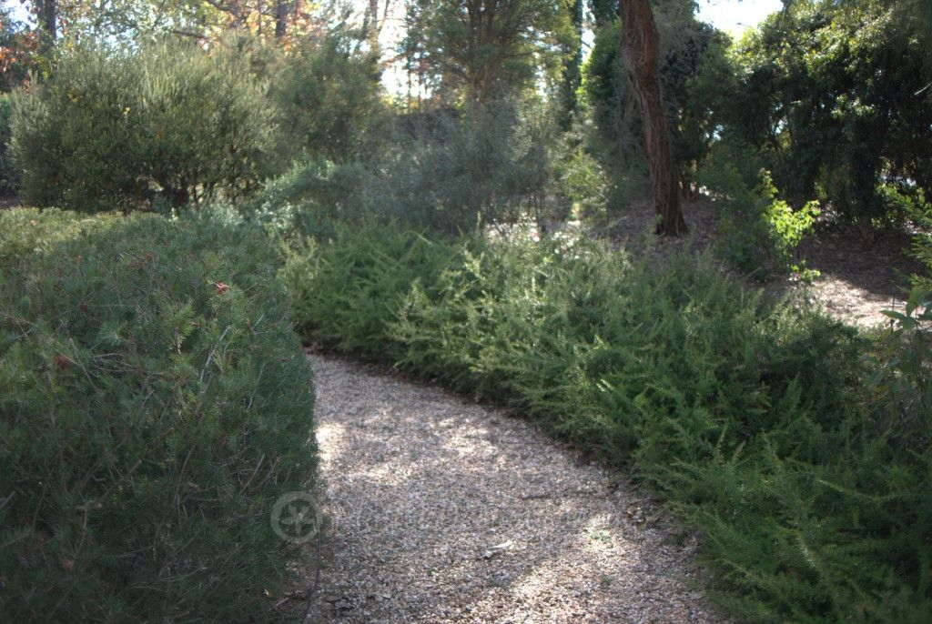 Walcotts garden in Canberra Australian Native Gardens