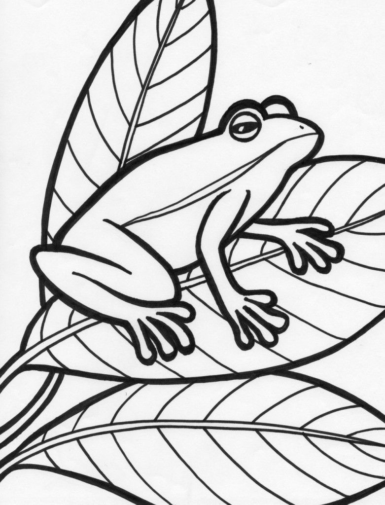 Pics Photos Printable Coloring Page Princess Frog