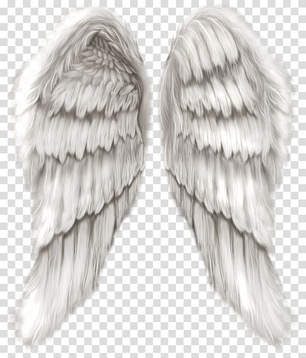 Pair Of White Wings Cherub Wing Angel Angel Wings Transparent Background Png Clipart Angel Wings Art Angel Wings Png Angel Wings Illustration
