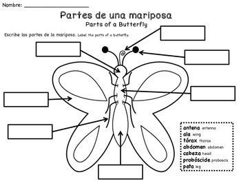 Mariposas Butterflies