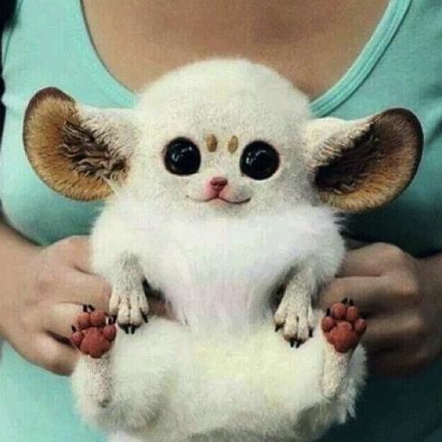 Weird Animals Cute 3